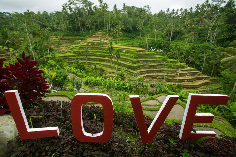 Love text written on the green rice terraces. Indonesia. Love text written on the green rice terraces. Bali, Indonesia royalty free stock photo