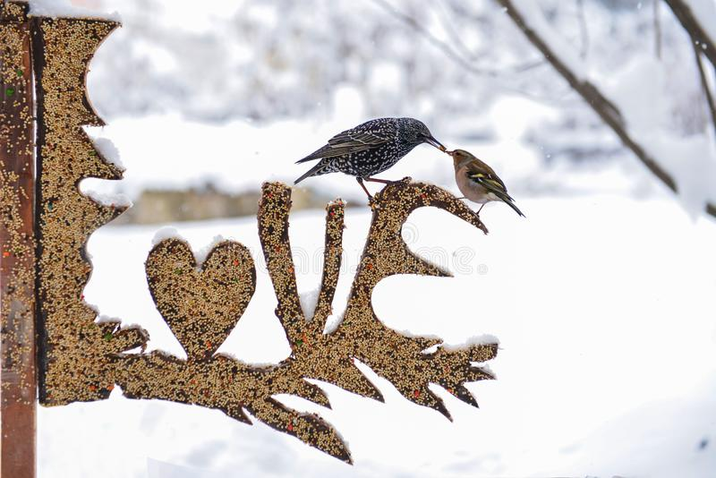 Love Bird Feeder. A bird feeder spelling out the words love with birds resting on them during wintertime royalty free stock image
