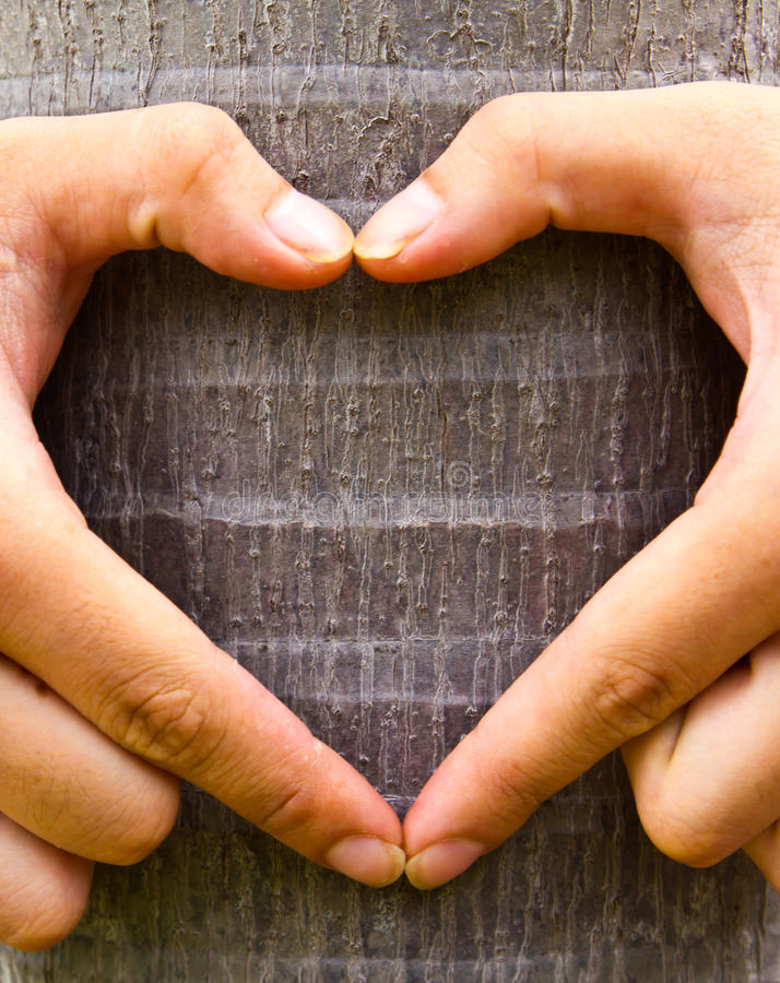 Download Love tree stock photo. Image of heart, concept, life - 15594524