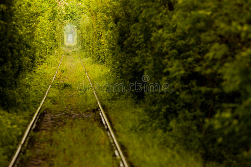 Love tunnel in Romania royalty free stock image