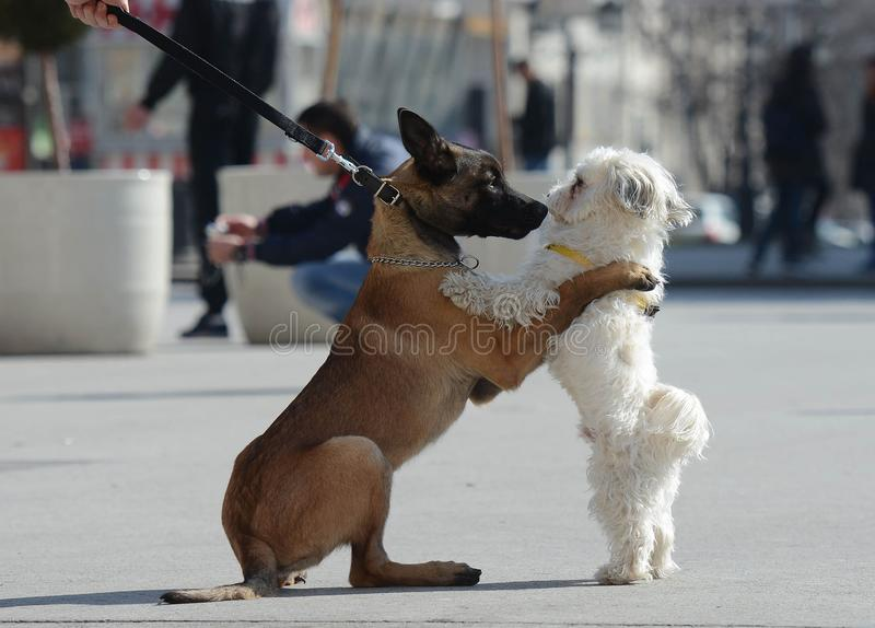 Love two dogs in the street royalty free stock photography