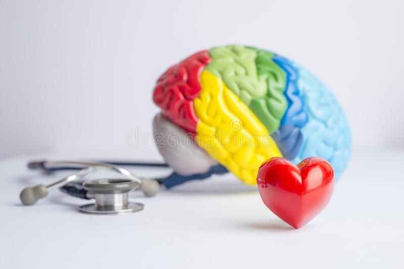 Love your brain/mental health concept. Love your brain/mental health concept shot in a studio - stethoscope, a colorful brain model and a heart stock photos