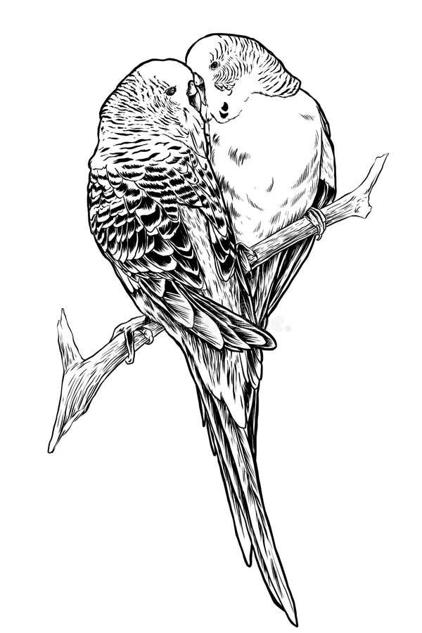 Lovebird Couple Stock Illustrations – 707 Lovebird Couple