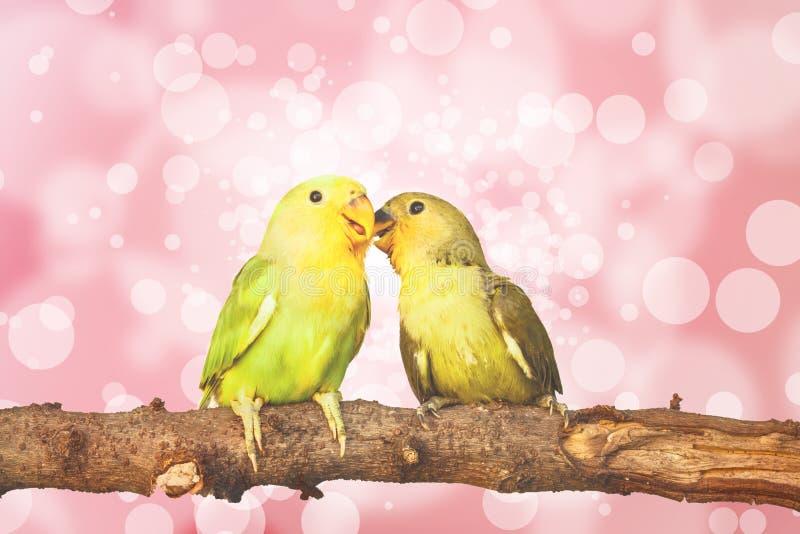 lovebird na Zamazanym czarodziejskich świateł tle zdjęcie royalty free