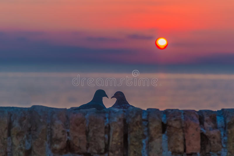 Lovebird sylwetka przy słońce wzrostem zdjęcia royalty free