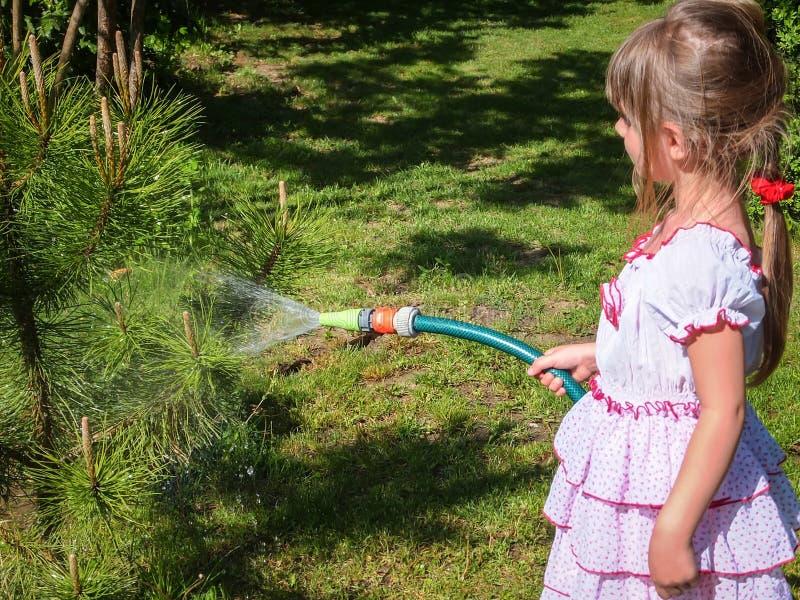 Милая маленькая девочка 5 - летняя с длинными светлыми волосами в lovelly белом платье моча небольшую сосну в саде стоковые изображения rf