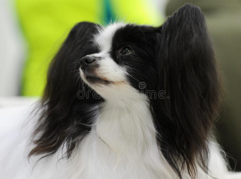 Lovely animals at the dog show stock photo