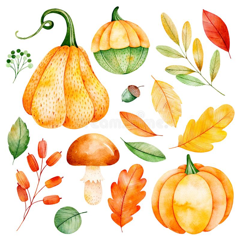 Watercolor fall leaves, branches,pumpkins etc. Lovely Autumn collection.Handpainted watercolor elements.Watercolor fall leaves, branches,pumpkins etc.Perfect royalty free illustration