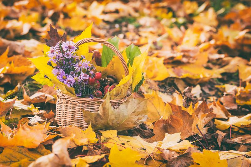 Lovely autumn concept, still life with flowers, berries and leaves in the basket, nature outdoor background royalty free stock photos