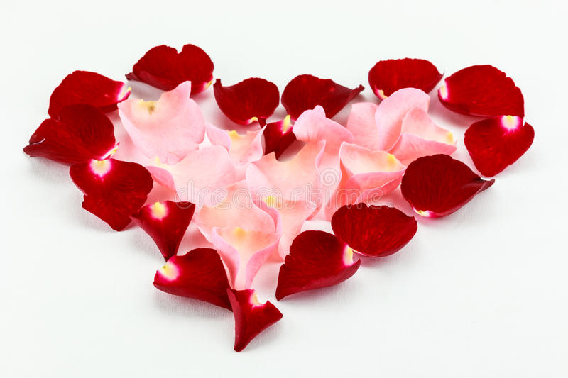 Lovely beautiful petal beautiful heart of red and pink rose royalty free stock photo