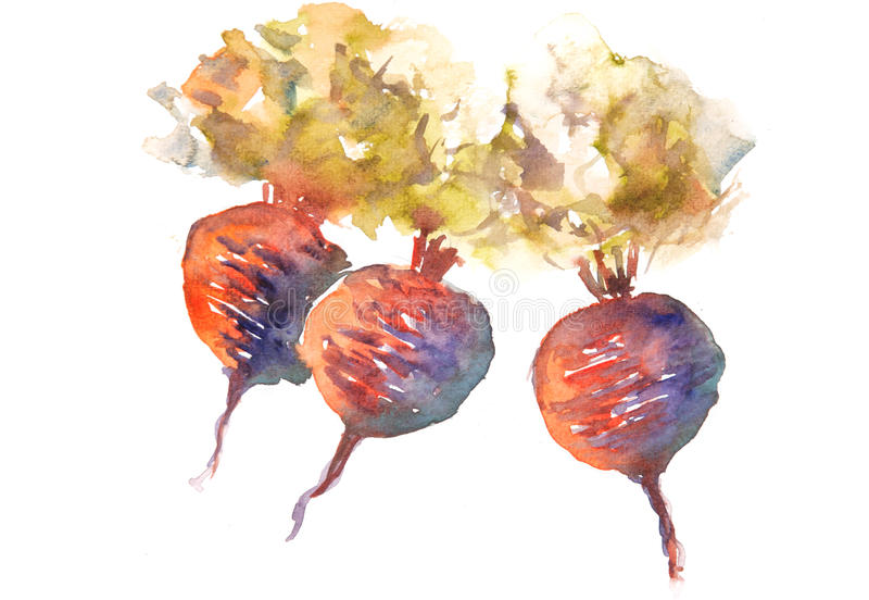 Lovely beetroots on white. Beetroot art, watercolor painting of still life vegetable concept stock illustration