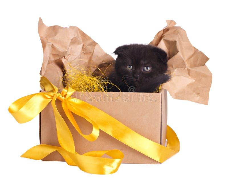 Lovely black kitten in a box set royalty free stock photo
