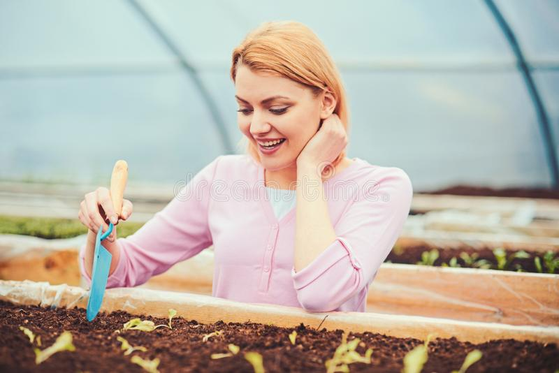 Lovely blond lady digging small hole in plant box. Female florist in pink cardigan working in greenhouse. Eco gardening royalty free stock photo