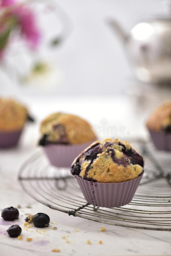 Lovely blueberrie muffins for your high tea royalty free stock photo