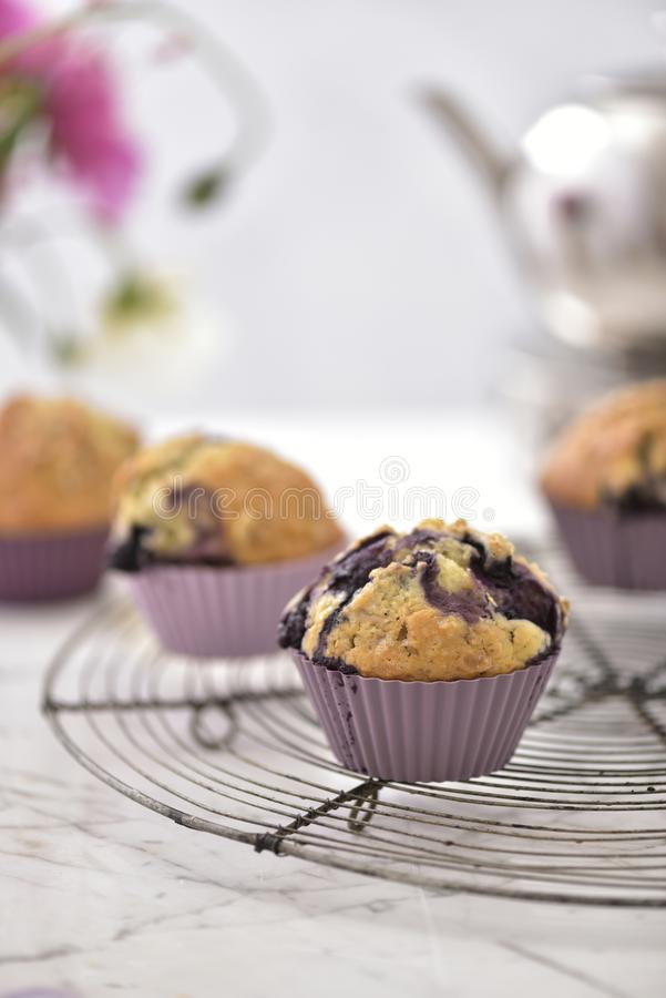 Lovely blueberrie muffins for your high tea stock photo