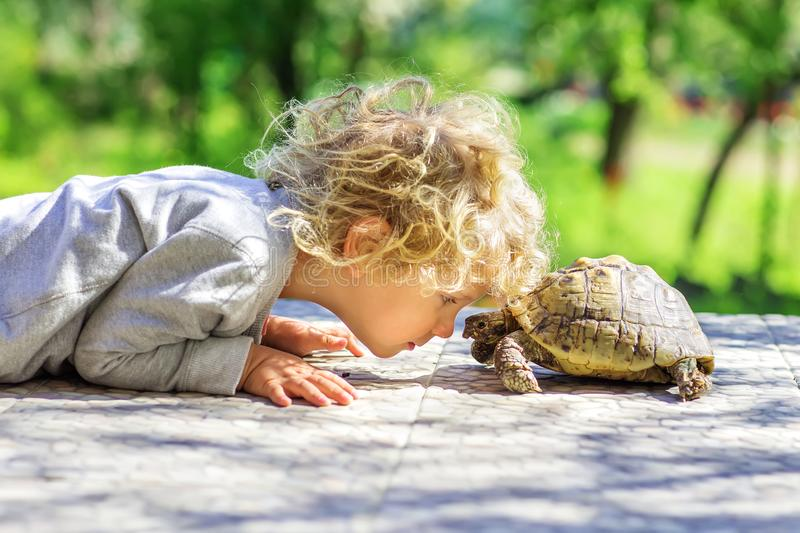 Lovely boy with turtle. Lovely boy with a turtle royalty free stock image