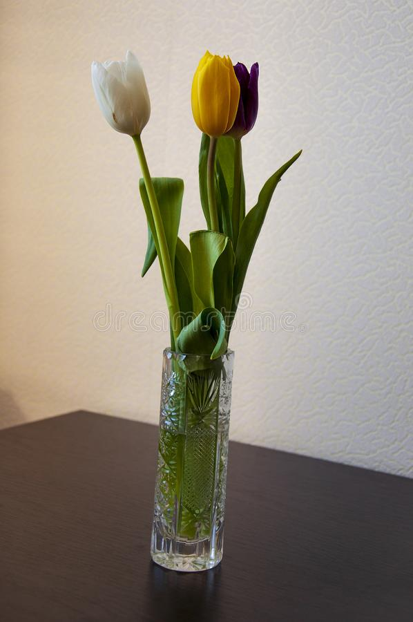 Lovely bright three flowers of tulips of white, purple and yellow color are standing on the table in the crystal vase. Green leave stock photography