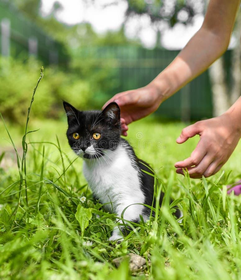 Lovely British kitten in a green grass stock photo