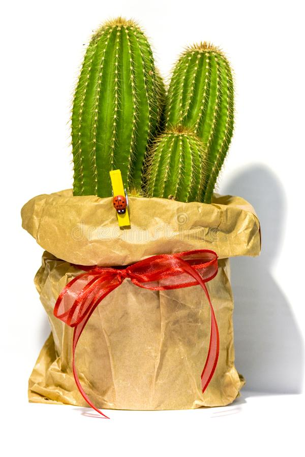A lovely cactus valentines day gift. Wrapped in a simple bag and a lucky bug on it stock photos