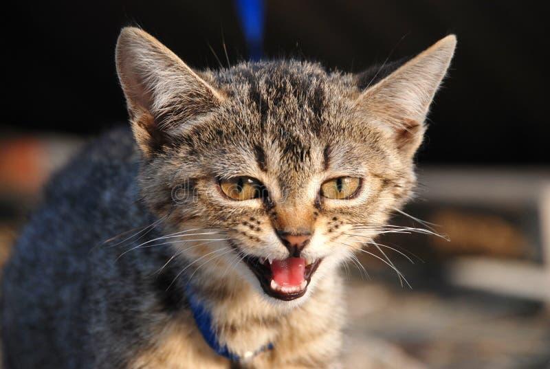 Lovely cat stock image