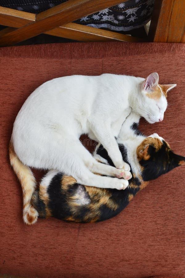 Lovely cat. Beautifulness royalty free stock photography