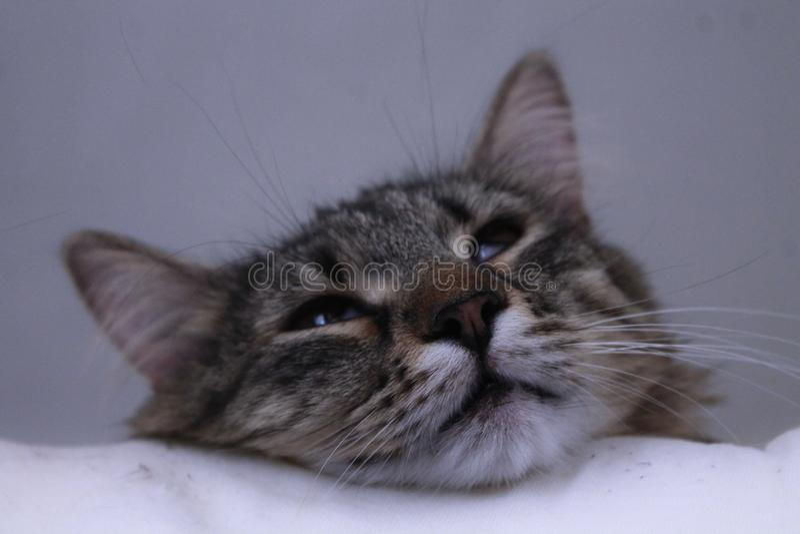 Cute Devil Cat royalty free stock image