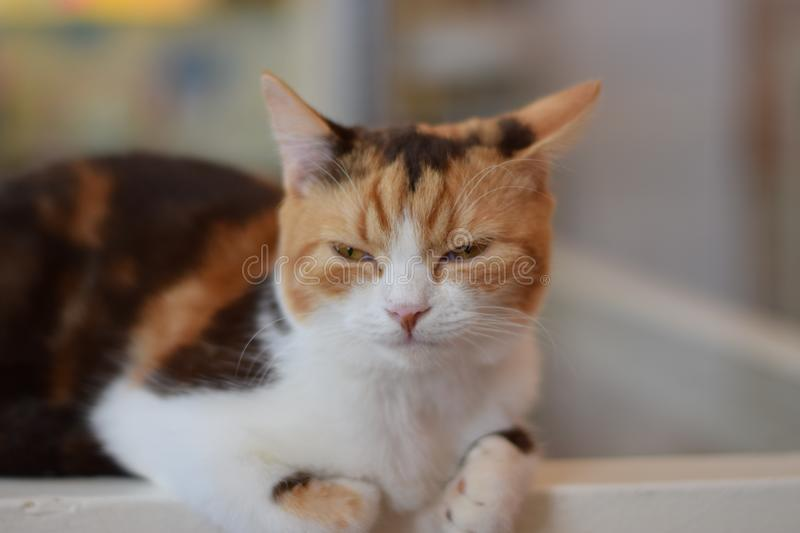Lovely cat royalty free stock image