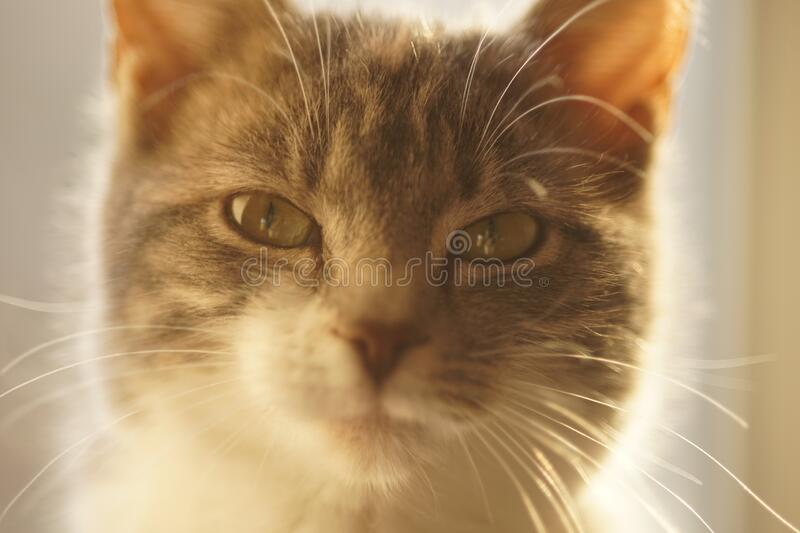 Lovely cat closeup portrait. Young kitten face.  royalty free stock photography