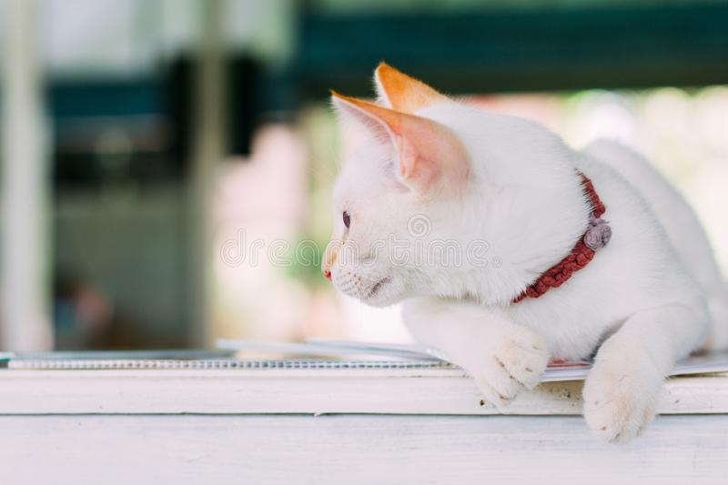 Lovely cat. Looking at copy-space. film tone stock photos