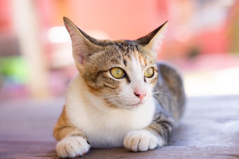 Lovely cat looking out the window stock photography