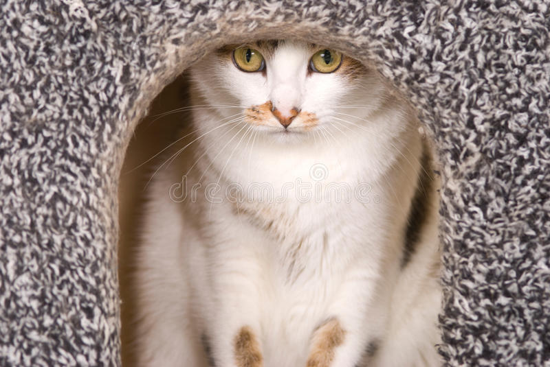 Download Lovely cat portrait stock image. Image of beautiful, indoors - 21547313