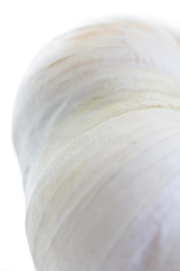 Lovely close up of garlic skin. With a painterly feel stock photography