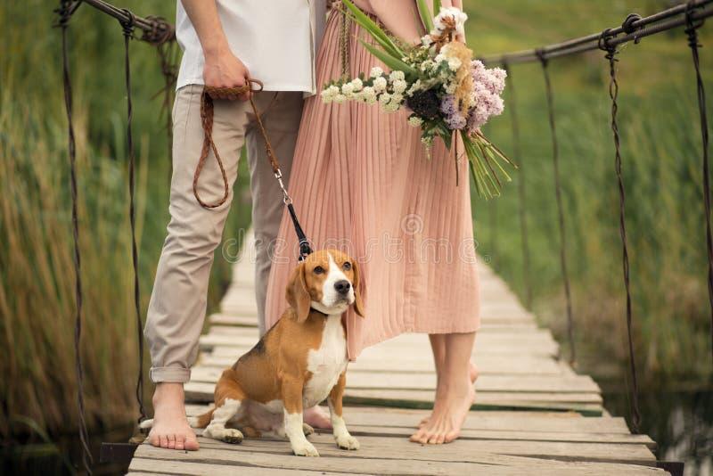 Lovely couple walking with dog on the bridge. Lovely couple walking with bigglle dog on the wooden bridge royalty free stock photography