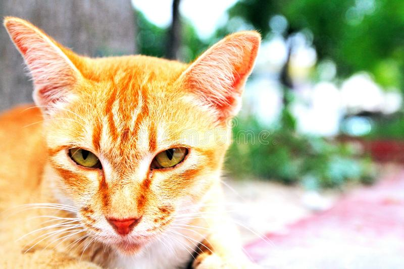 Lovely cute cat looking something and soft blurred background royalty free stock photo