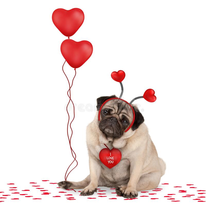 Lovely cute valentines day pug puppy dog sitting down on confetti, wearing hearts diadem and holding red heart shaped balloons. Isolated on white background royalty free stock photo