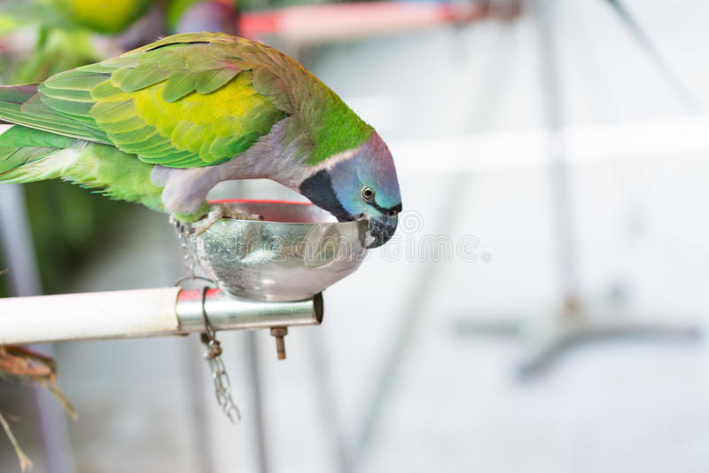 Parrot Chain Stock Images - Download 89 Royalty Free Photos