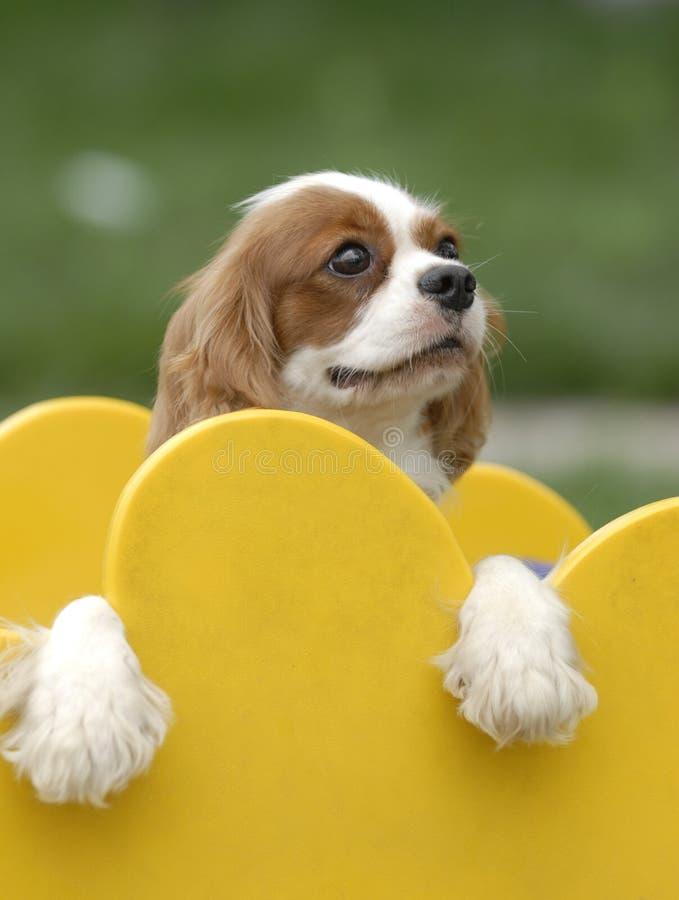 lovely dog royalty free stock photography