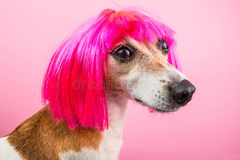Lovely dog profile side in pink wig royalty free stock photo
