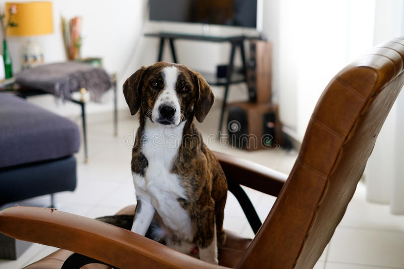 Lovely dog left alone ready for messing up royalty free stock photo