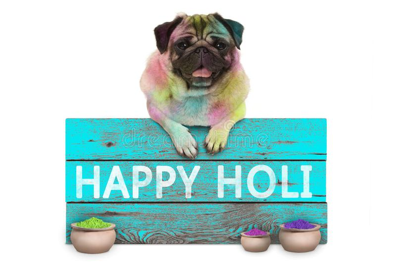 Lovely Festival of colors pug puppy dog, covered with colored powder, hanging on sign with text happy Holi stock photos