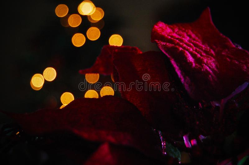 A lovely flower warm tea lights background stock image