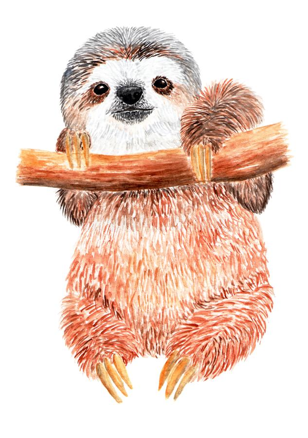 Sloth is hanging on a tree branch. Watercolor illustration. stock images