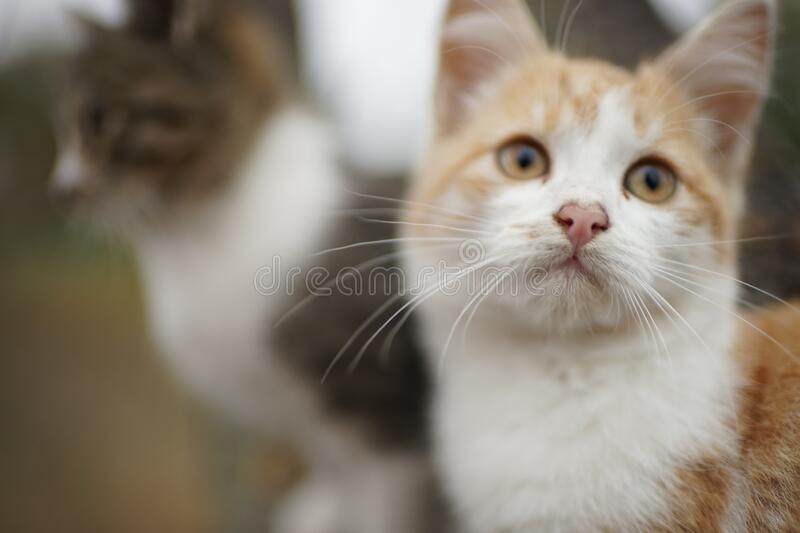 Lovely ginger kitten closeup portrait. Cute young cat in nature.  stock photo