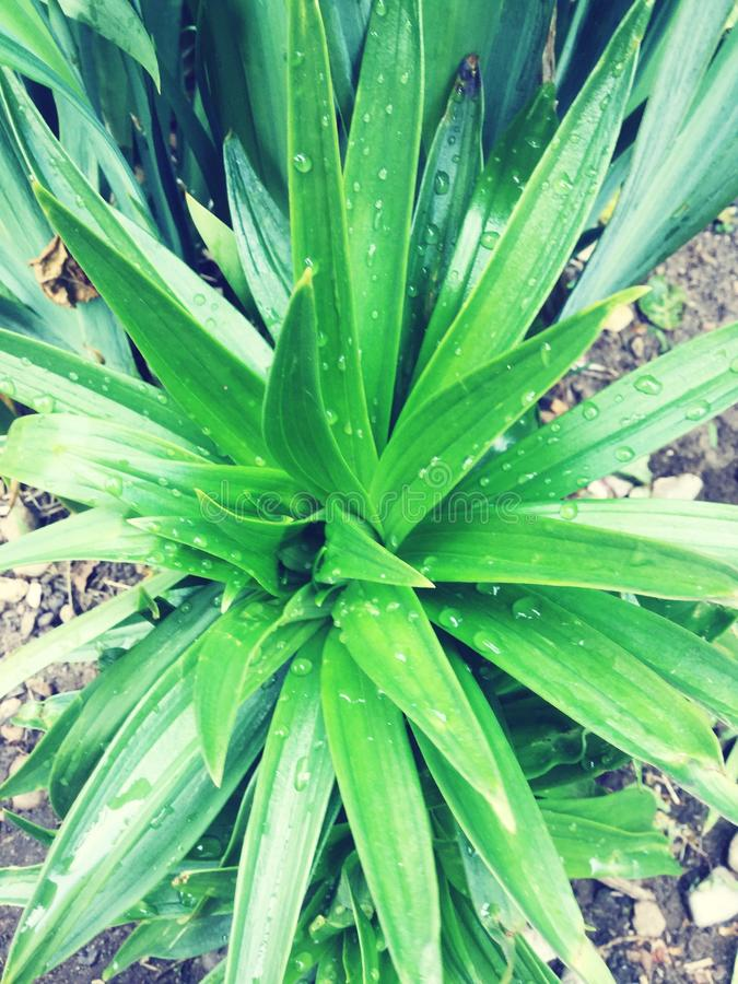 Lovely green leafy plant royalty free stock images