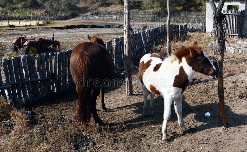 The lovely horse colt. And his mother. photo in Ulanbutong, Inner Mongolia stock photo