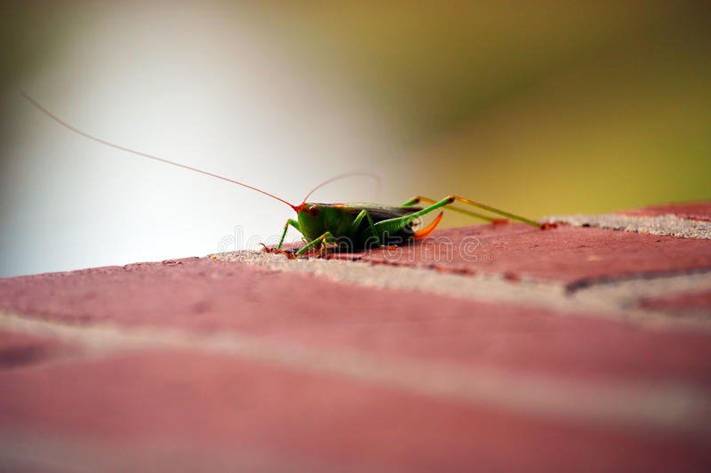 Lovely insect stock photography