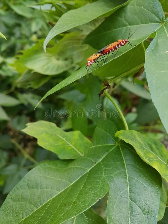Lovely insects royalty free stock photography