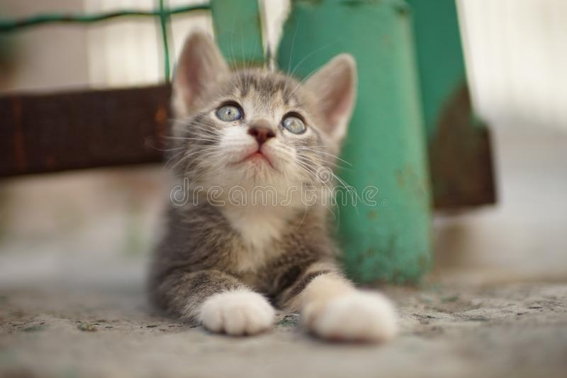 Lovely kitten enjoying outdoors, sweet furry pet with pleasure lying down on the asphalt stock photos
