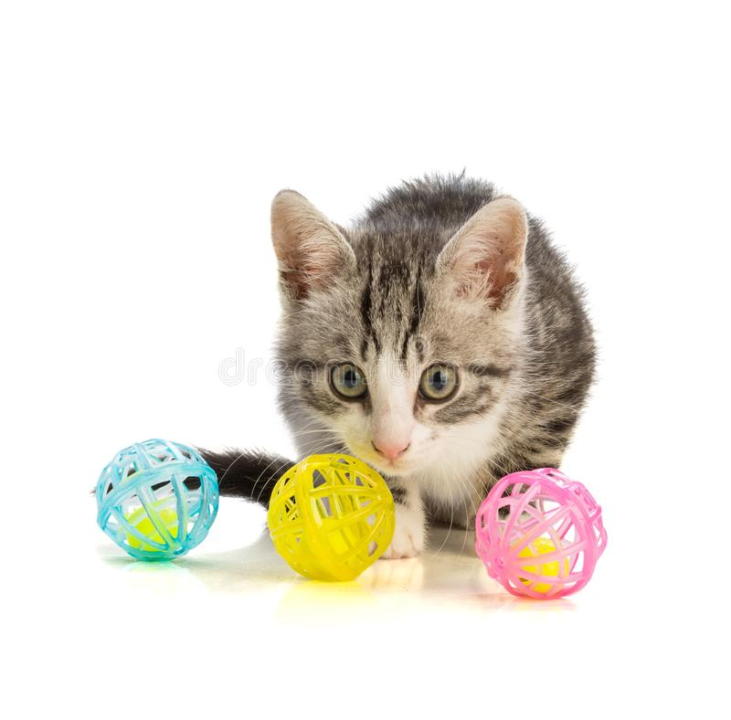 Lovely kitten playing with color balls. On white background royalty free stock image