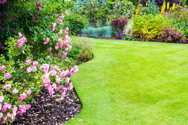 Lovely light pink roses bushes in victorian garden. Lovely light pink roses bushes and geen lawn in victorian garden stock image